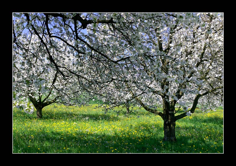 Traumhafter Frühling