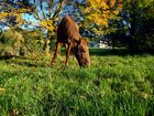 traumhafter Herbsttag 1