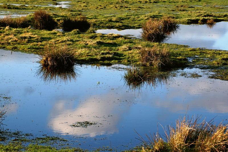 Traumhafter Pfützen-See in den Archsumer Wiesen (Sylt)
