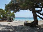 Traumstand auf Korsika (Playa de Roccapina)