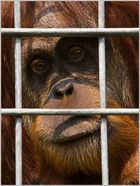 traurig hinter Gittern