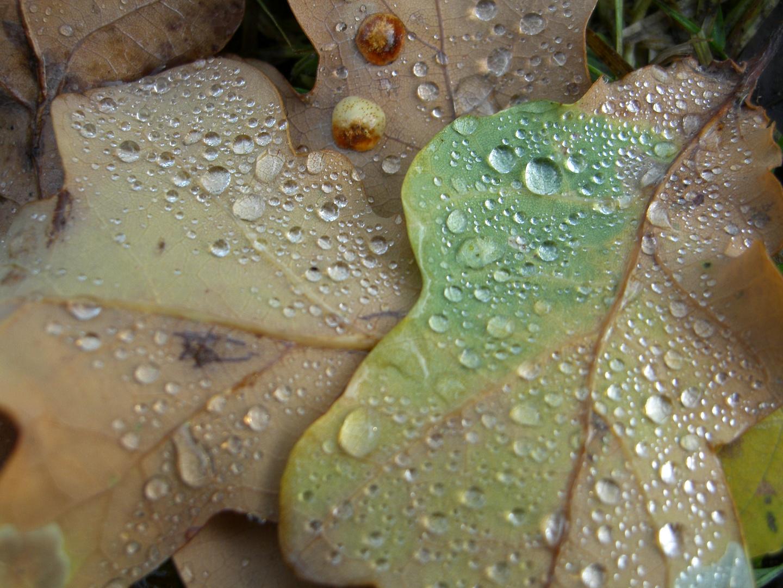 traurige Blätter