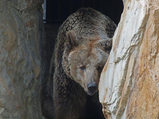 Trauriger Bär