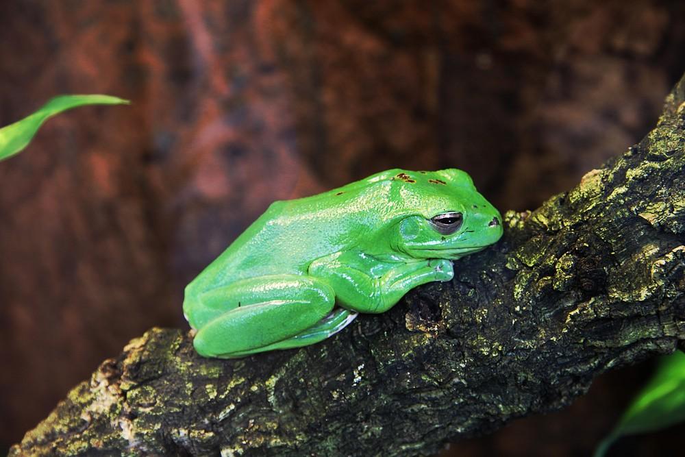Trauriger Frosch