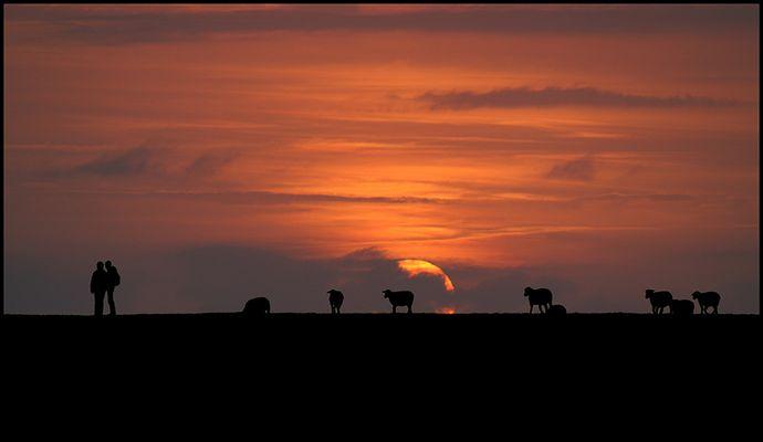 Traute Zweisamkeit - nur die Schafe schauen zu.