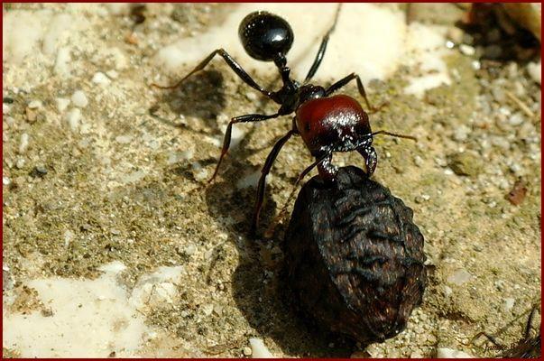 """""""Travail de fourmis..."""""""