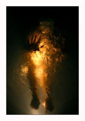 Être de Lumière