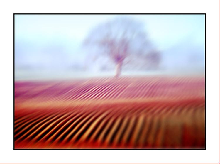 Tree #110