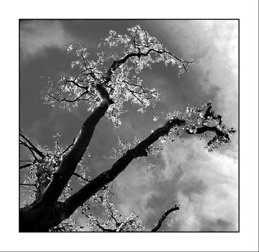 Tree #116 Tod und Leben