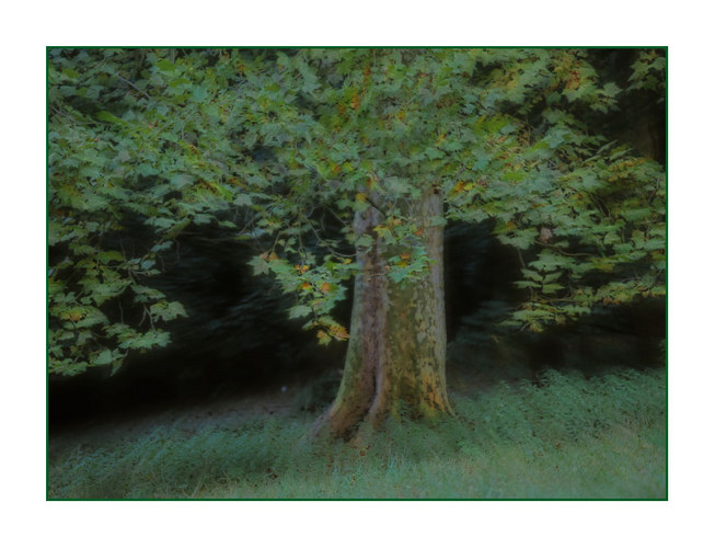 "Tree #137 ""simply green """