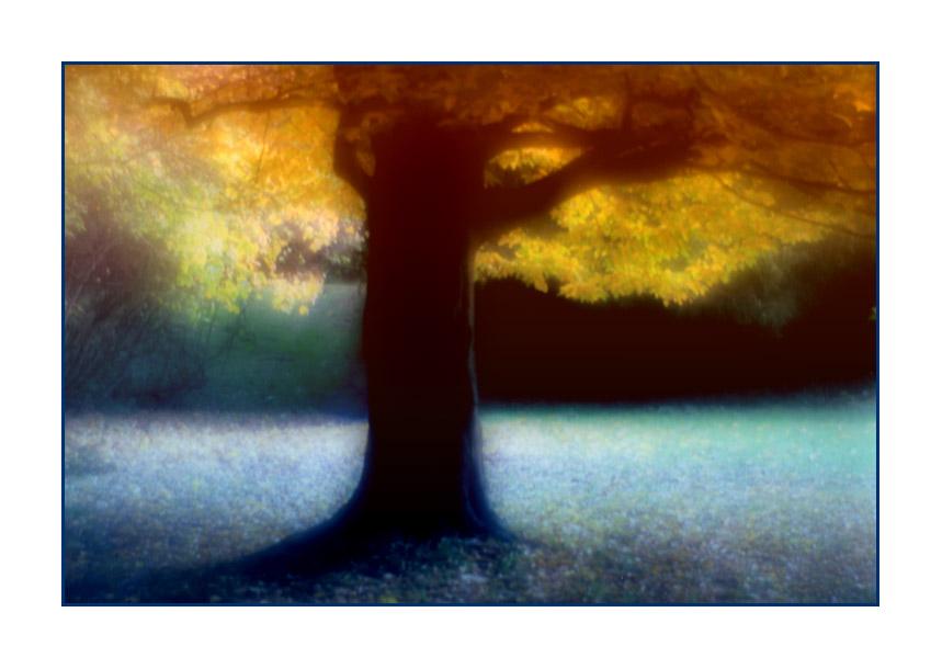 """Tree #139 """"Es war mir, als träumte ich"""""""