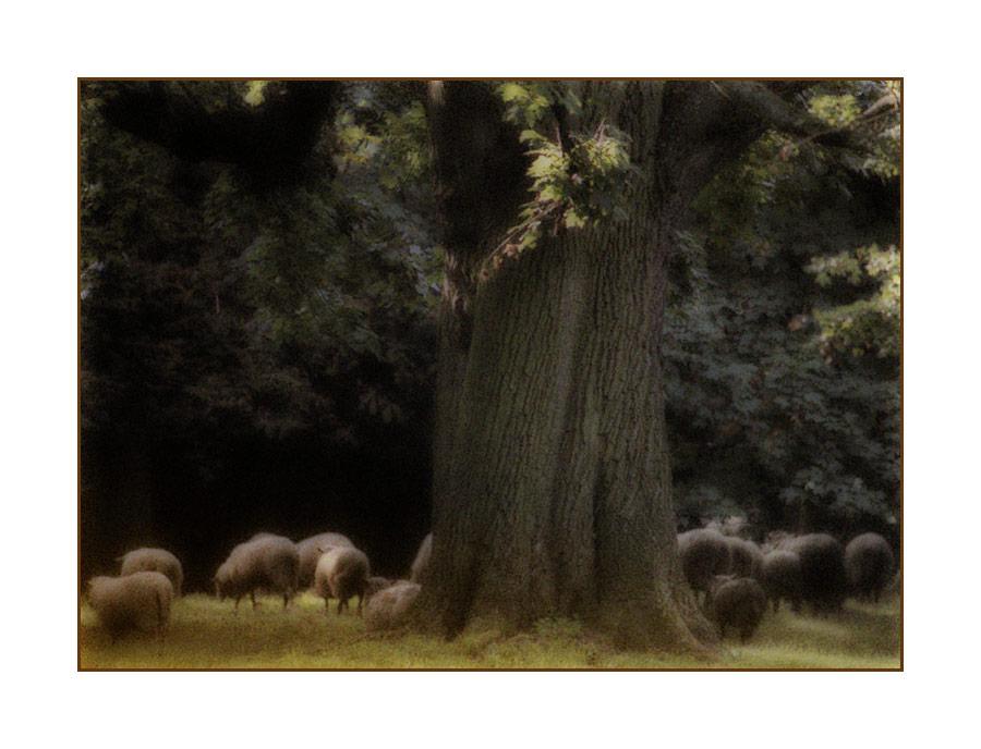 """tree #259 """"autumn romance"""""""