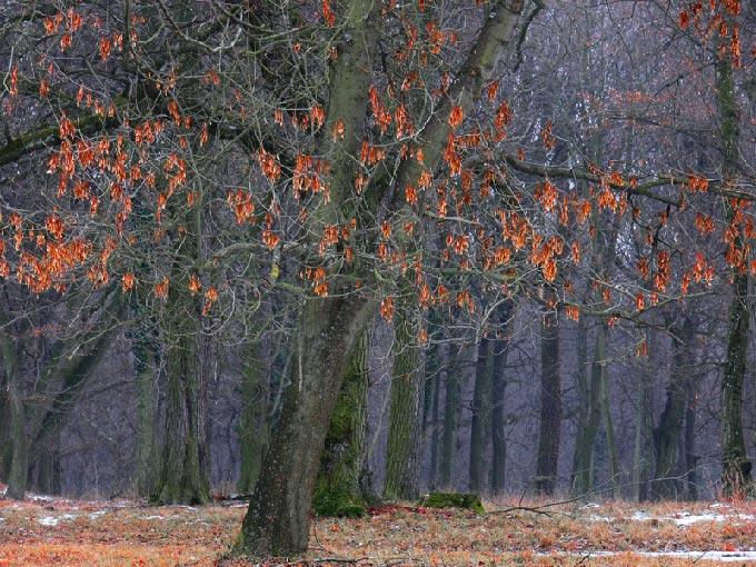 """tree #296 """"Winterbäume II"""""""