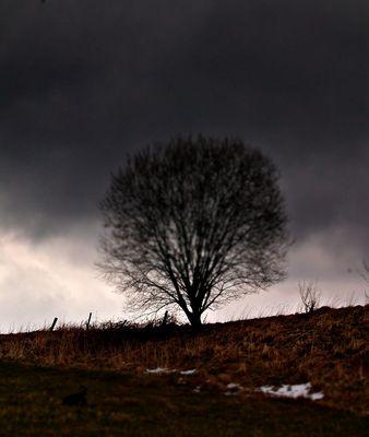 tree²