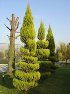 ^^^ tree ^^^