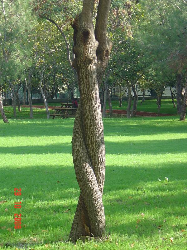 Tree a love...