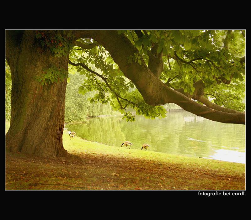 ~ Tree and Lake ~