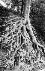 Tree at the River Walk