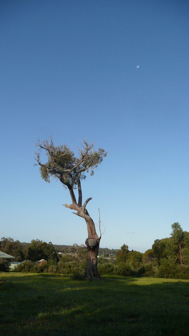 Tree behind the Firebreak
