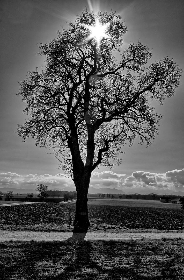 tree-bw-01