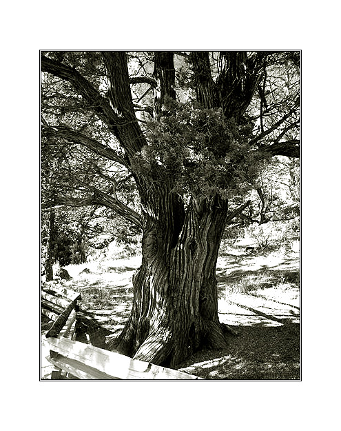 tree...