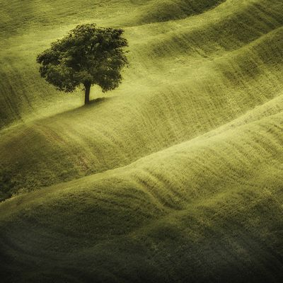 Tree & Carpet