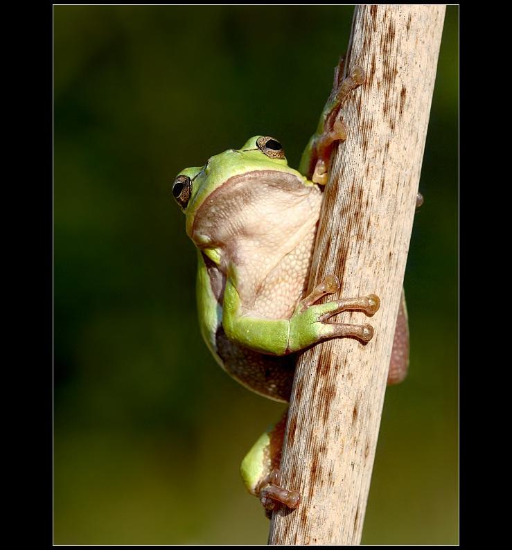Tree-Frog II