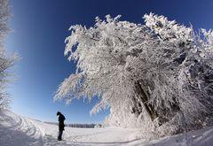 Tree-Frost