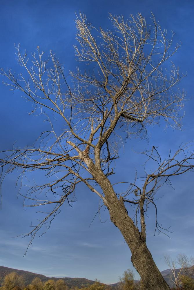 Tree in blue sky