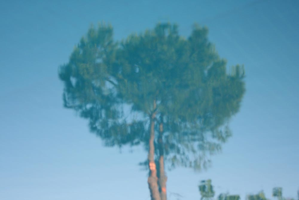 tree in the pool