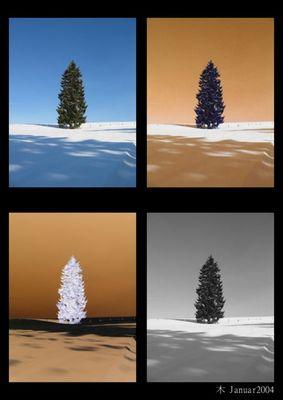 Tree Januar 2004