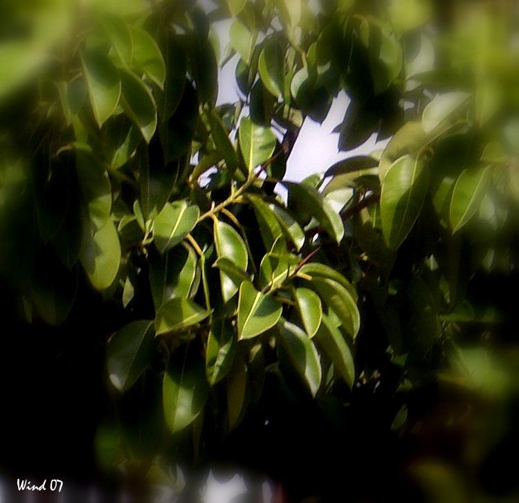 Tree leves