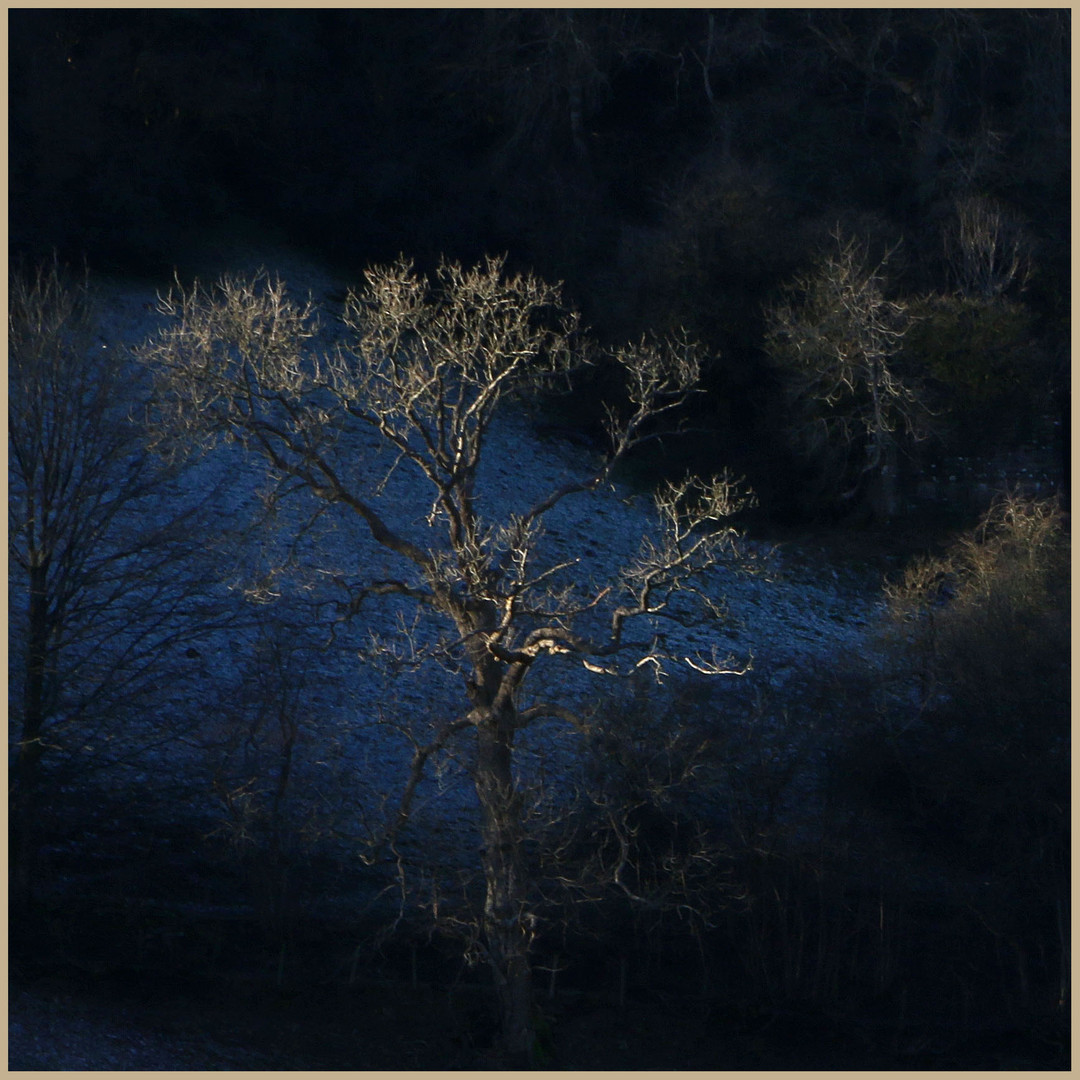 tree near muker in winter