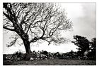 [ Tree of life ]