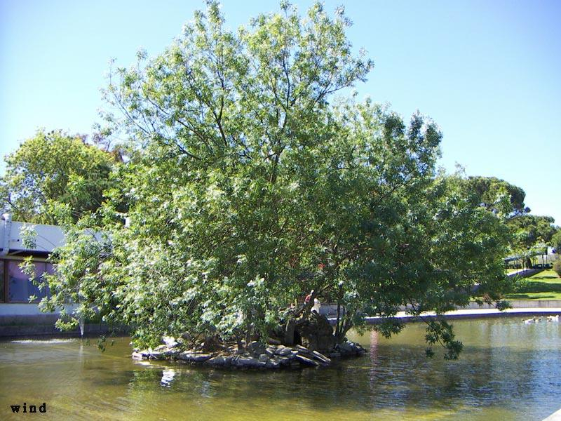 Tree on lake