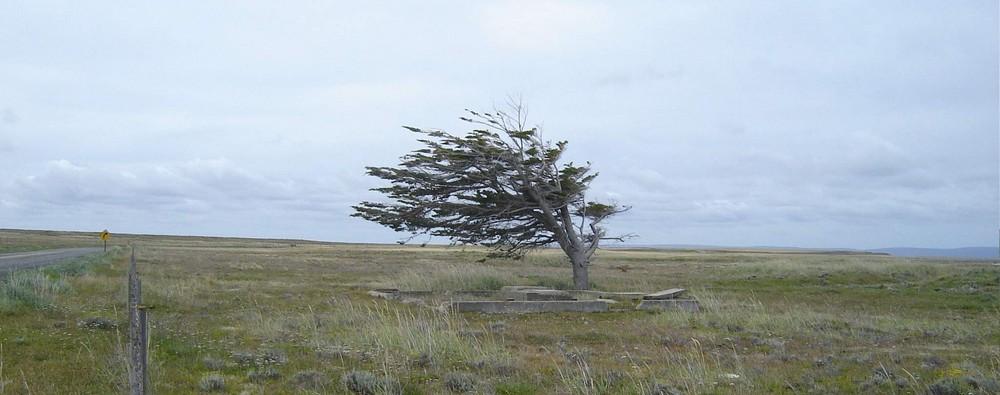 Tree on Tierra del fuego