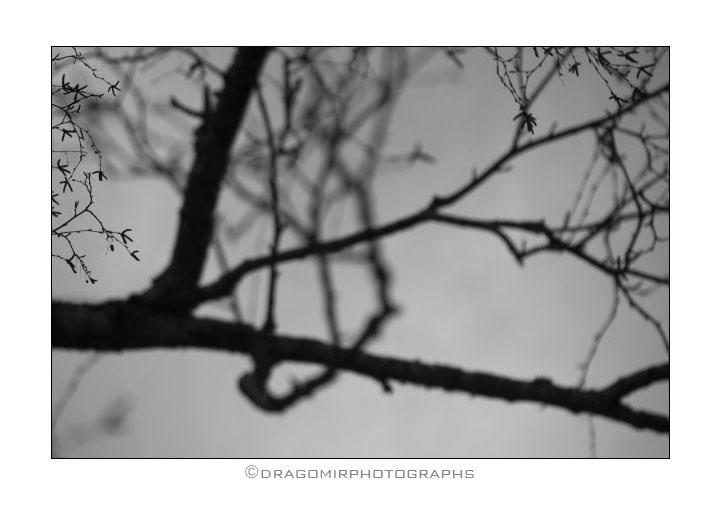 Tree One 8