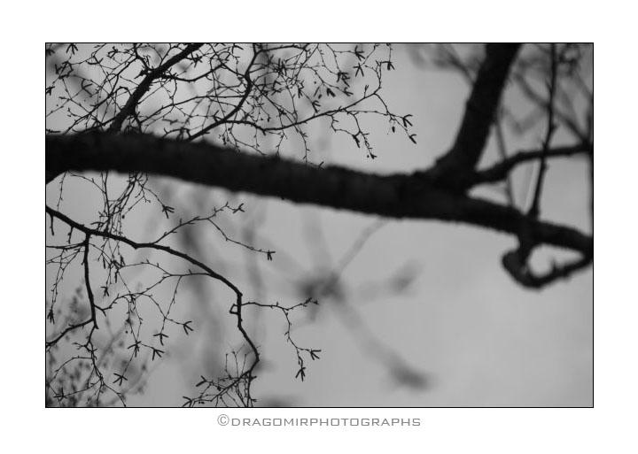 Tree One 9