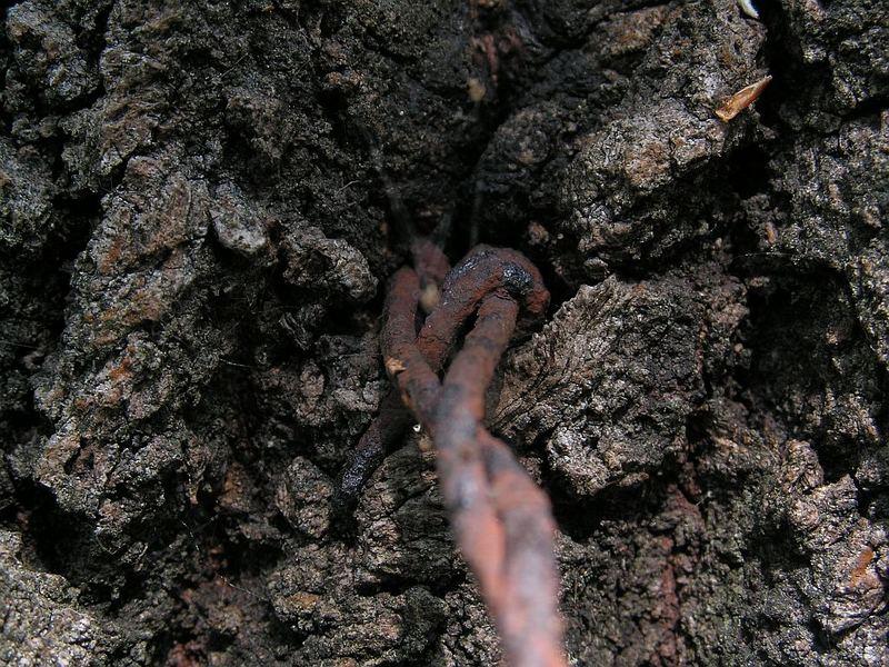 Tree pain
