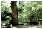 Tree Series #3