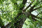 Tree Spirl