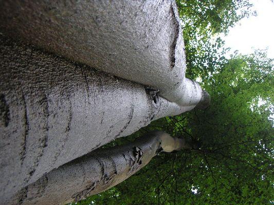 Tree-Triade