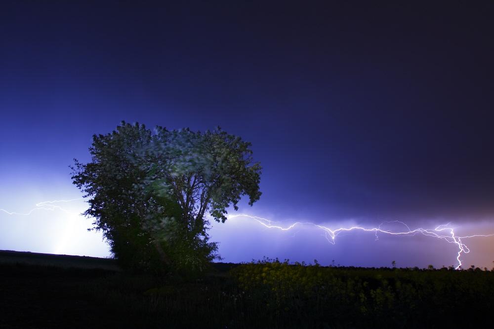 tree voltage
