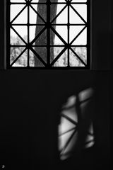 tree, window and shade