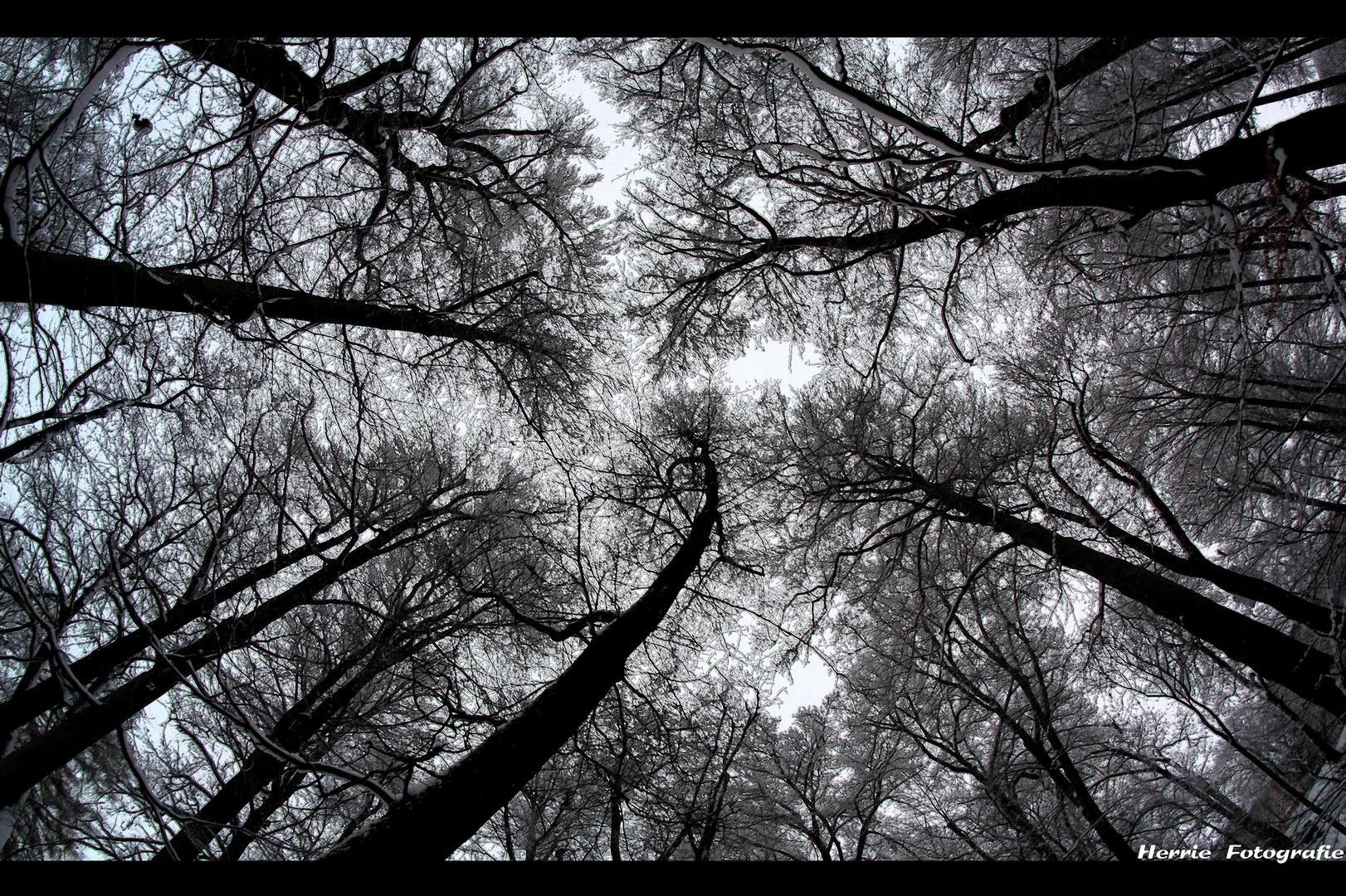 Tree World