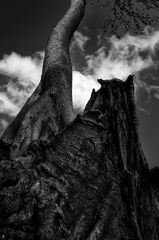 tree.art