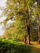 Trees at Dawn