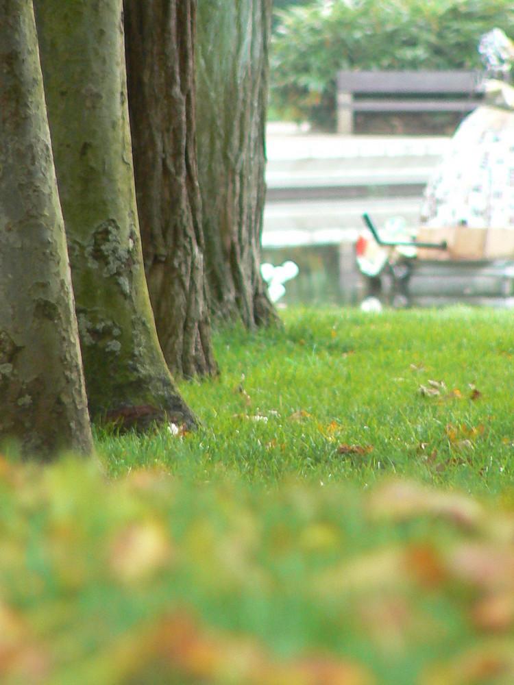 ...;;;trees;;;...