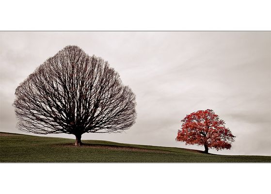 Trees ...