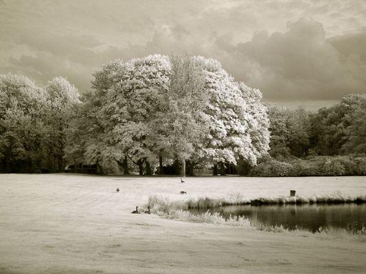 Trees, Geese & Lake